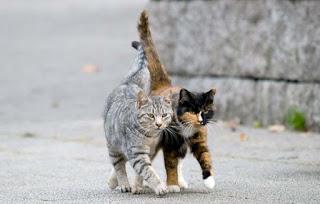 улични котки